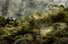 Avant nous / Before us (brunomalfondet) Tags: malaisie forêtprimaire cameronhighlands sliderssunday