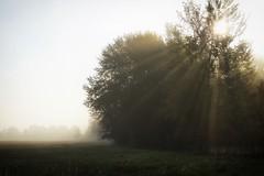 *** (pszcz9) Tags: polska poland przyroda nature natura naturaleza słońce sun mgła fog mist drzewo tree poranek morning jesień autumn sony a77 beautifulearth pejzaż landscape