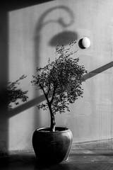 Verticaal - Vertical (naturum) Tags: 2019 amsterdam blackandwhite blackwhite bw cruquiuskade februari february geo:lat=5236758795 geo:lon=493033573 geotagged holland lamppost lantaarn lantaarnpaal lichtmast nederland netherlands plant potplant pottedplant schaduw shadow verticaal vertical winter zw zwartwit noordholland nld