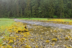 IMG_6894 (Forestplanet) Tags: great bear rainforest 2017
