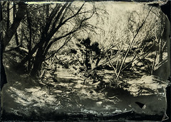 Limekiln Canyon Creek II BGA (Blurmageddon) Tags: largeformat 5x7 senecaimprovedview wetplatecollodion alternativeprocess landscape nature bostickandsullivan newguycollodion nicksdeveloper limekilncanyonpark porterranch california bga blackglass ambrotype blackglassambrotype epsonv700