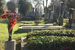 IMG_8364 (Pfluegl) Tags: wien vienna zentralfriedhof graveyard europe eu europa österreich austria chpfluegl chpflügl christian pflügl pfluegl spring frühling simmering
