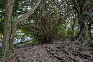 Hawaii 2019-0626.jpg
