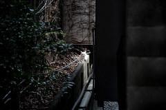 20190320a73_6219 (Gansan00) Tags: lce7m3 α7ⅲ sony japan 大分県 oita 日本 beepu 別府 landscape snaps ブラリ旅 03月 fe24105f4