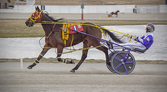 On the Track (sjoblues) Tags: harnessracing horse sulky racing racetrack animal action motion