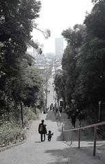 誘引 (an attraction) (Dinasty_Oomae) Tags: fujifilm fujixf10 xf10 富士フイルム outdoor 千葉県 千葉 chiba 市川市 市川 ichikawa 寺 temple 寺院 階段 steps 親子 family