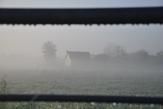 * (Vinylone AFS-UTS) Tags: misty morning vibes