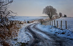 Winter On The Lane (Missy Jussy) Tags: winteronthelane newhey rochdale cold countryside rural trees snow lane landscape lancashire northwest england uk greatbritian weather britishweather january winter 2019 frozen fence road barbwire fields windingroad canon canon5dmarkll canon5d canoneos5dmarkii 50mm ef50mmf18ll ef50mm canon50mm fantastic50mm outdoor outside