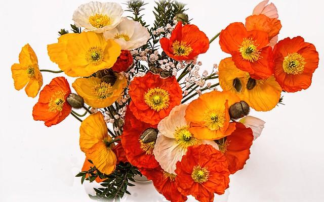 Обои маки, букет, лепестки картинки на рабочий стол, раздел цветы - скачать