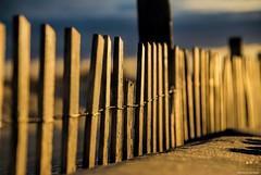 Snapped....HFF!!! (Joe Hengel) Tags: snapped hff happyfencefriday fencefriday fence fenceline friday fencepost seafence sandfence delaware de lewes lowerslowerdelaware lsd lewesde sussexcounty sand beach seaside seashore