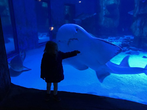 Holly and the shark
