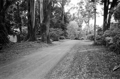 Hume Lane!! (Matthew Paul Argall) Tags: canonsnappy20 fixedfocus 35mmfilm blackandwhite blackandwhitefilm 100isofilm kentmere100 road street humelane