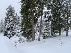 Harz-Oderbrück_e-m10_1012057021 (Torben*) Tags: rawtherapee olympusomdem10 olympusm12mmf20 urlaub vacation harz oderbrück winter snow schnee bäume trees kaiserweg
