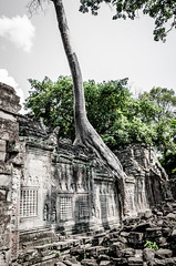 Diplodocus (Cédric Nitseg) Tags: nikon asie siemreap taprohm greelow travelling backpacking backpacker tree travel cambodge arbre voyage d7000 asia temple cambodia