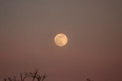 Spring Supermoon,Aberdeen_Mar 19_403 (Alan Longmuir.) Tags: grampian aberdeen misc sky moon springsupermoon