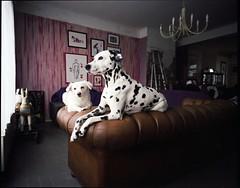 c'est pas un chien, c'est mon Tobby (JJ.BT) Tags: fujinph400 mamiya7ii 43mmf45