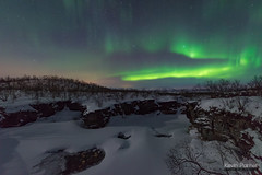 Above the Abisko River (kevin-palmer) Tags: abisko sweden swedishlapland arctic march winter clear night sky stars starry space astronomy astrophotography aurora auroraborealis northernlights green cold snow snowy abiskoriver abiskocanyon cliffs flowing water birchtrees forest nikond750 sigma14mmf18 europe moonlight moonlit