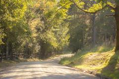 Camino de otoño (C.hess-fg) Tags: paisaje landscape otoño autumn sunrise amanecer goldenhour camino road campo chile sur surdechile nikon nikond5200 naturaleza nature naturelover naturephotography 50mm outdoor