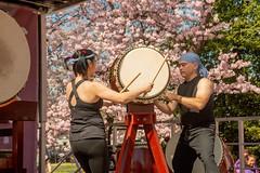 CherryBlossomDC2019-674.jpg (carlton.colter) Tags: kizuna cherryblossomdc taiko taikotakeover sakurataikofest washington dc usa
