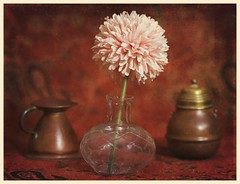 Still Life (N.the.Kudzu) Tags: tabletop stilllife copper pots glass vase flower mum paisley meike 85mmf28 macro lens photoscape texture frame home ringlight canondslr