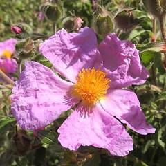 Flower (unicorn7unicorn) Tags: цветок macromondays pastel colorfulnature spotlight