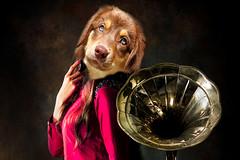 A440 Music (Ulrich Scharwächter) Tags: musik frau hund