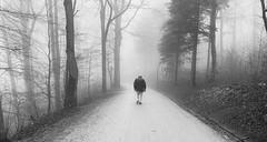 new year, same fog (Toni_V) Tags: iphone iphoneography xr hiking wanderung uetliberg fog nebel mist neujahr newyear perspective zurich switzerland schweiz suisse svizzera svizra europe bw monochrome blackwhite ©toniv 2019 190101 street