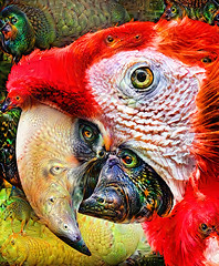 The theory of evolution (Changing for the new year) (jackaloha2) Tags: evolution species changes bird macaw colorful strange fantastical surreal