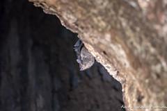 Bat (adventurousness) Tags: drake bay baths wildlife costa rica travel traverling parque nacional corcovado bahia photo photography traveler bahiadrake costarica drakebay parquenacionalcorcovado travelphoto travelphotography