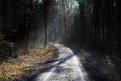 Vorfrühling in einem Eichenforst - Early spring in an oak forest (cammino5) Tags: eichenforst lichtstrahlen februar 2019 franken bayern deutschland