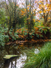 A Winter's Day (Steve Taylor (Photography)) Tags: green brown orange yellow lake water newzealand nz southisland canterbury christchurch fern grass trees leaves winter