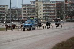 Berlin Trabrennbahn Mariendorf 10.2.2019 (rieblinga) Tags: berlin tempelhof mariendorf trabrennbahn renntag 1022019 6rennen wetten pferde sport