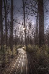 Boardwalk (LarryHB) Tags: 2015 creative hdr horizontal missouri missouristateparks nature park swamp tree wetland winter wonderlust fineart