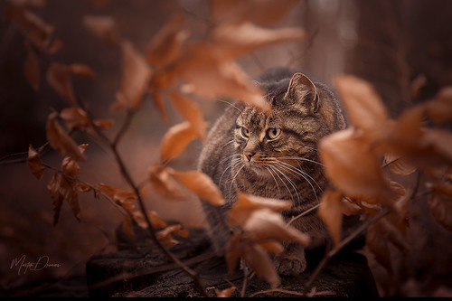 Cat between leaves