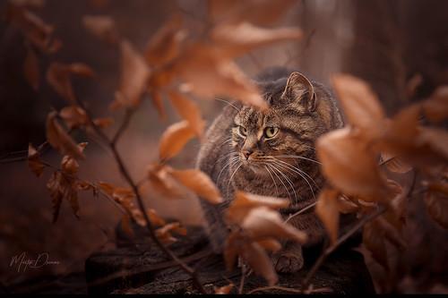 Cat between leaves