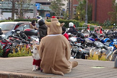Rudolph and Friend - Merry Christmas (runslikethewind83) Tags: xmas christmas rudolph season holiday december japan asia yokohama pentax people dog pet costume asiatico 일본