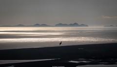 atlantic evening (bernd obervossbeck) Tags: atlanticocean atlantischerozean atlantik iceland island sea seagull meer möwe bird vogel licht light eveninglight abendlicht abendstimmung eveningmood berge mountain fujixt1 xf55200mmf3548rlmois berndobervossbeck silhouette