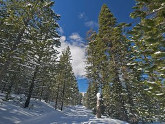 mp1130811BendCloudyDay (thom52) Tags: thom bend central oregon xc skiing snow sno park meissner