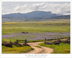 Road And Fence, Carrizo Plain (G Dan Mitchell) Tags: carrizo plain nationalmonument hills mountains wildflowers bloomyellow purple gravel rural road barbedwire fence nature landscape spring clouds california usa north america