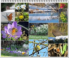 Winter or Spring? (Deida 1) Tags: february sun snow bee flowers butterfly ladybird fishingpool water birds uk staffordshire collage garden