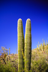 IMG_1287 (Victor Hernandez Photography) Tags: canon canonphotography canon7d arizona sabino canyon cactus saguaro desert az