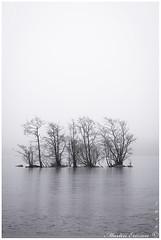 190302 033web (Marteric) Tags: fog mist nature trees tree ice sandared viaredssjön borås sweden lake reflection foggy misty seascape winter black white bw
