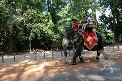 Angkor_Siem Reap_2014_21