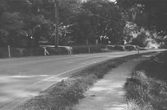 Mount Dandenong Tourist Road (4) (Matthew Paul Argall) Tags: spartus35fmodel400 35mmfilm kentmerepan100 100isofilm blackandwhite blackandwhitefilm road street mountdandenongtouristroad