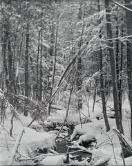 Into the Woods #07 (azhukau) Tags: buschpressman modeld schneiderkreuznach xenar47135mm delta100 ilford filmphotography analogphotography epsonperfectionv500photo analog analogue forest ontario canada winter season snow creek stream tree woodland nature outdoors monochrome blackandwhite 6x7