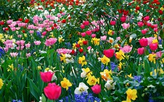 Ten Common Mistakes Everyone Makes In Names Of Flowers All Over The World | names of flowers all over the world (franklin_randy) Tags: pretty flowers names all world around over
