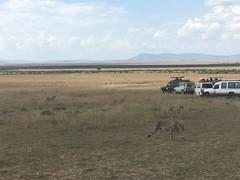 IMG_1580 (suuzin) Tags: masai mara safari