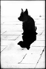 La transformación no es dulce ni brillante. (elena m.d.) Tags: tula nikon sigma sigma105 monocromo contraste street dog silueta contraluz