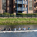ROWING IN BELFAST [THE RIVER LAGAN NEAR THE GASWORKS]-151084