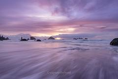 D85_4252 (captured by bond) Tags: oregon pacificocean ocean oceanscape purple rocks capturedbybond